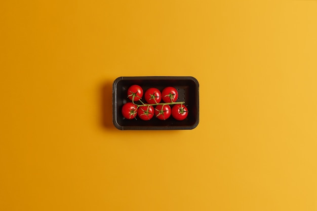 Pomodorini piccoli sani su uno stelo in contenitore nero isolato su sfondo giallo. deliziose verdure per preparare il succo di pomodoro o l'insalata estiva vegetariana. perfetto raccolto gustoso