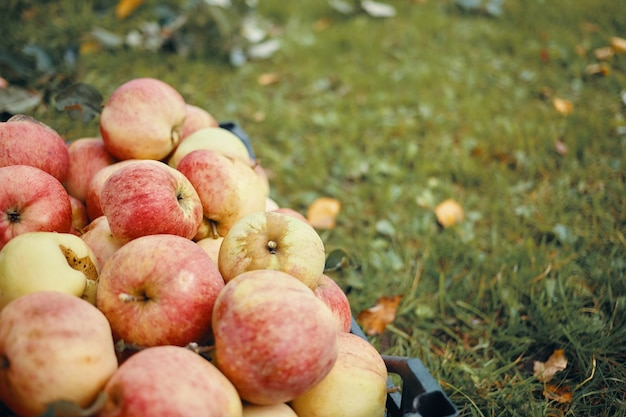 Cibo biologico sano, agricoltura, giardinaggio, agricoltura, vitamine e concetto di stagione.
