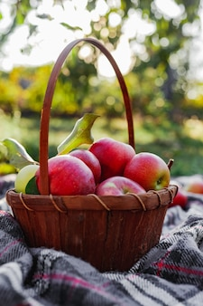 かごの中の健康的な有機赤熟したリンゴ。田舎の庭で秋。自然の中で新鮮なリンゴ。村、素朴なスタイルのピクニック。天然リンゴジュースのためのリンゴ園の組成物。