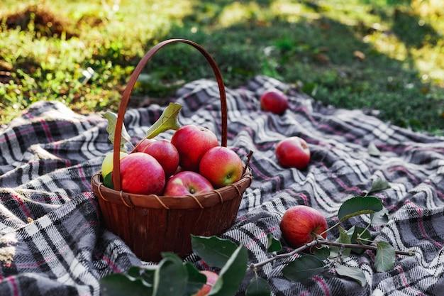 バスケットの中の健康的な有機赤熟したリンゴ。田舎の庭で秋。
