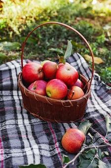 かごの中の健康的な有機赤熟したリンゴ。田舎の庭で秋。