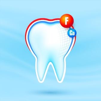 カルシウムとフルーアのシールドを備えた健康的な強い歯。保護されている白い歯。歯の手入れ。