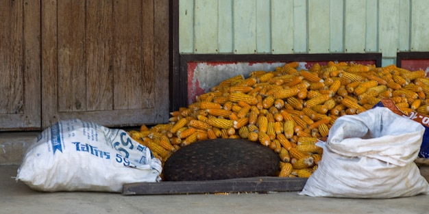Heap of corn cobs near wall, chiang rai, thailand