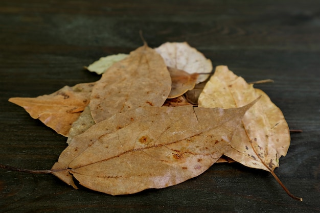 Heap of dried bay leaves on black wooden background