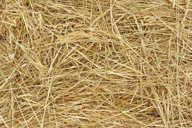 Heap of dry brown hay