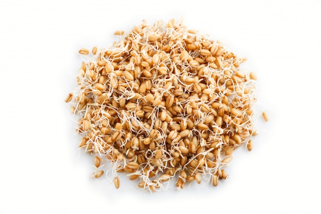 Heap of germinated wheat isolated on white background, top view.