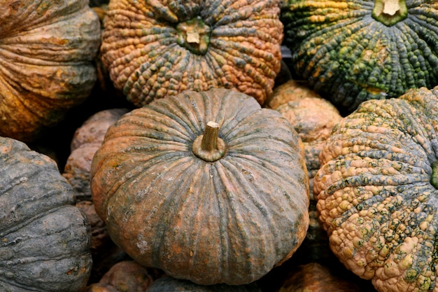 Heap of green and orange color rough skin pumpkins