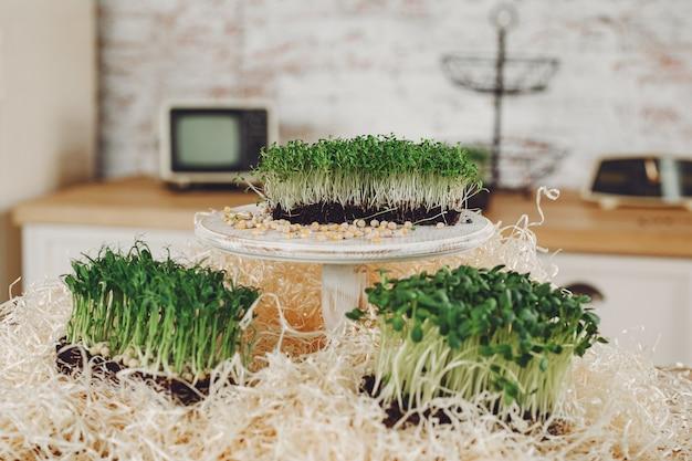 Куча свеклы микро зелень на столе