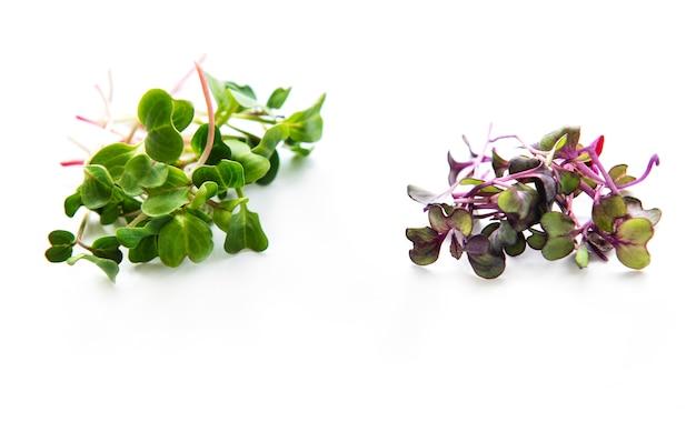Куча редиса микрозелень