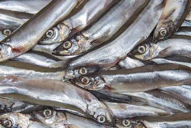 小さな海魚カラフトシシャモのヒープ