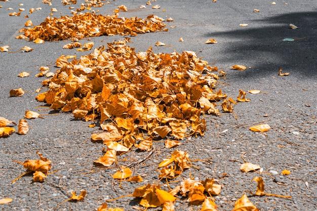 거리의 노란 단풍 더미