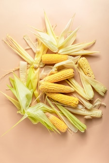 Heap of ripe yellow corn cobs with leaves