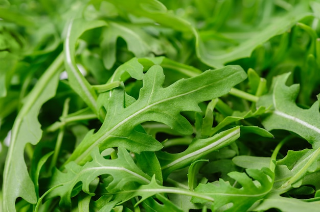 Heap of ruccola