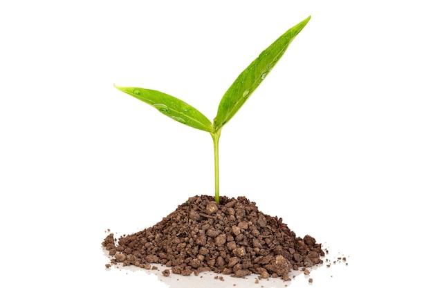 緑の芽のあるヒープ土壌