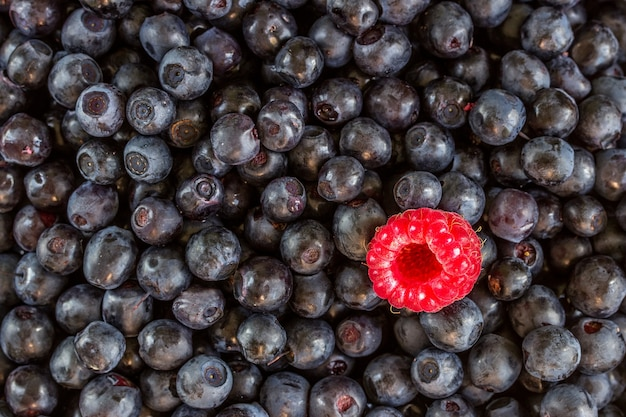 Heap of sweet fresh blueberries with one raspberry. can be used as background