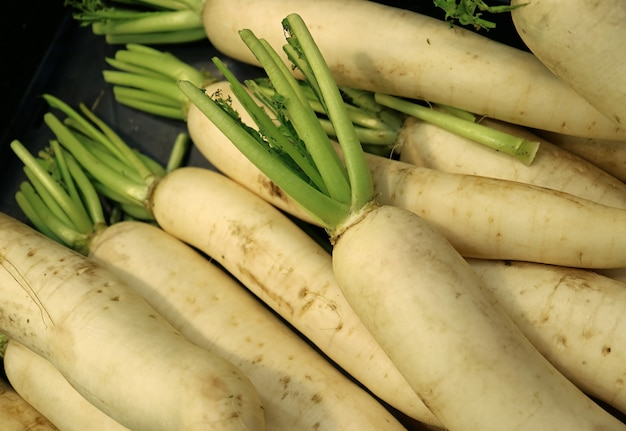 Heap of white radish or daikon radish