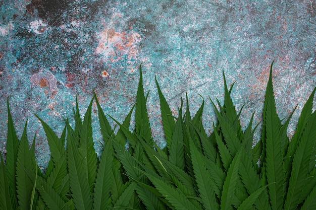 Куча листьев марихуаны.