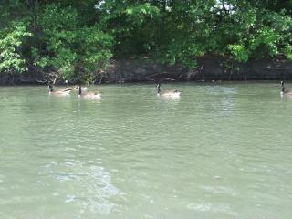 Heard of happy geese, heard