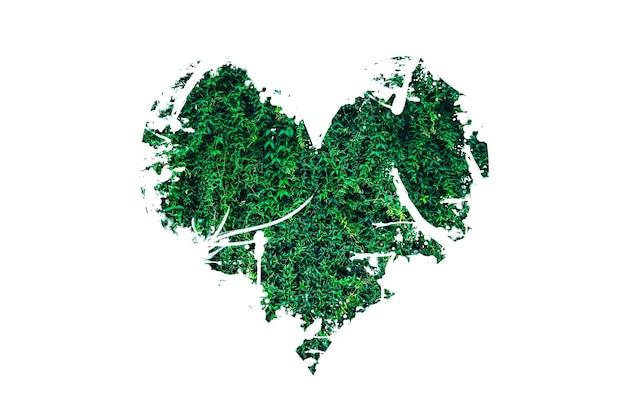 Сердце из листьев, изолированные на белом фоне. планета любви. концепция экологически чистой природы.