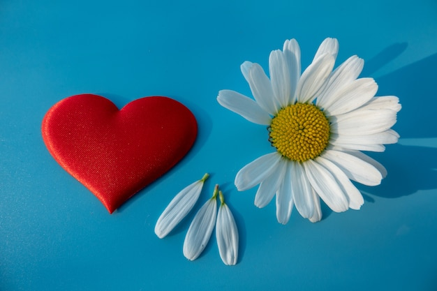 The heart is made of daisies camomiles on blue background.