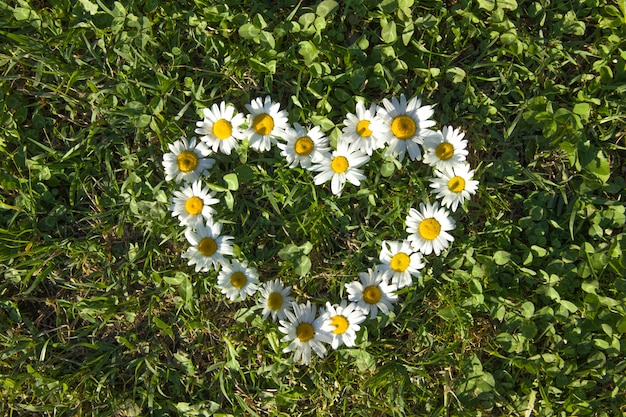 Heart made of daisies on a green meadow