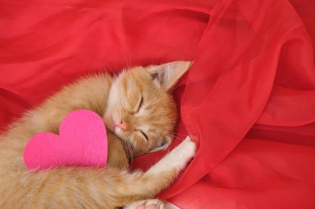 펠트로 만든 하트와 귀여운 생강 새끼 고양이는 붉은 바람이 잘 통하는 직물 복사 공간에 놓여 있습니다