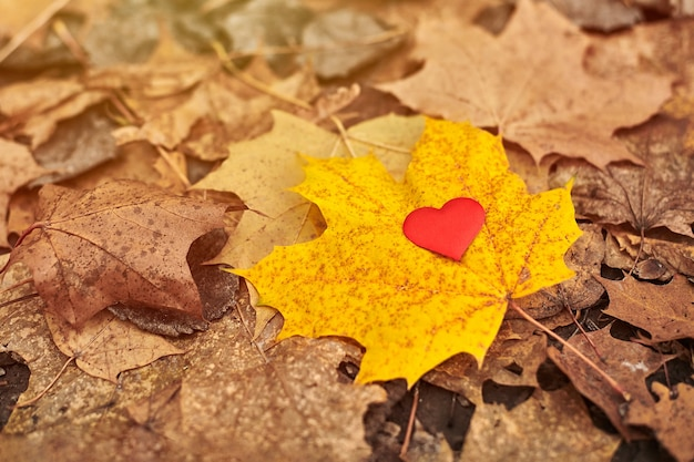 Heart on maple leaf. open pure heart symbol, copy space. unrequited love, infatuation or loneliness concept.