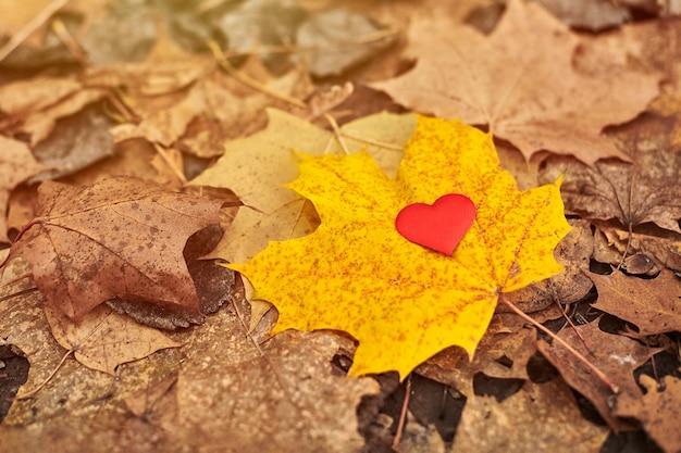 カエデの葉の上の心。純粋なハートのシンボルを開き、スペースをコピーします。片思い、夢中または孤独の概念。