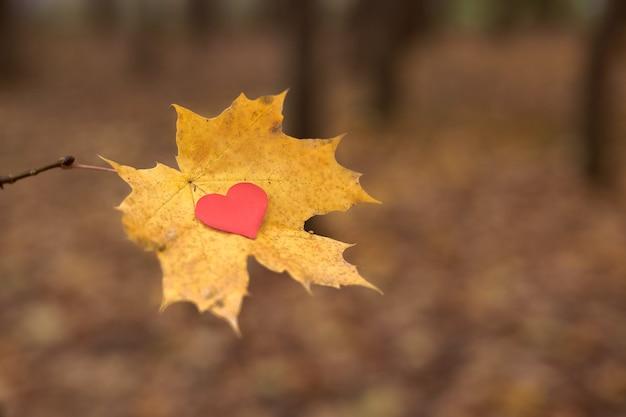 カエデの葉の上の心。純粋なハートのシンボルを開き、スペースをコピーします。片思い、片思い、孤独のコンセプト。バレンタインデーの片思いの犠牲者。美しい秋の背景。