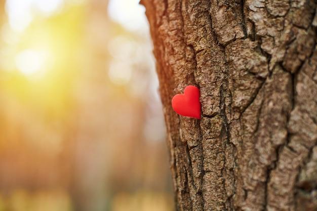 나무에 심장입니다. 환경 보호 기호, 복사 공간.
