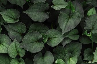 ハート型の緑の葉のパターンの背景