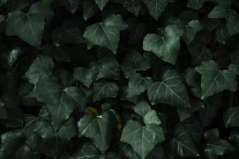 Heart shape green leaves pattern background