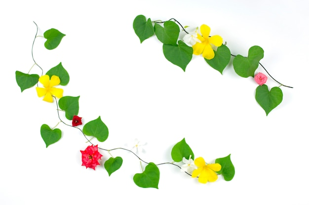 Heart shape leaves and flowers frame on white background