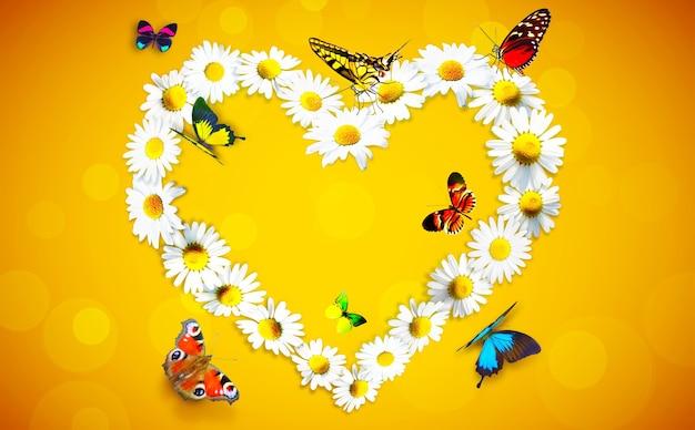 白いカモミールデイジーの花と蝶から作られたハートの形