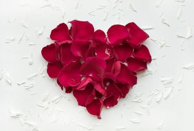 Форма сердца из розы с лепестками цветов на белом, вид сверху