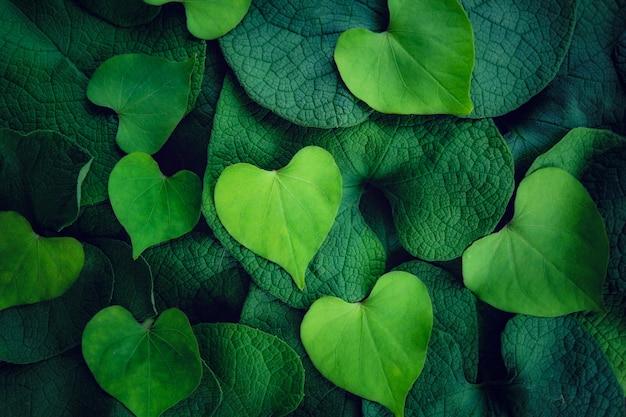 明るい緑のハートの形が濃い緑の葉に葉っぱりつく愛のバレンタインデーbackgro