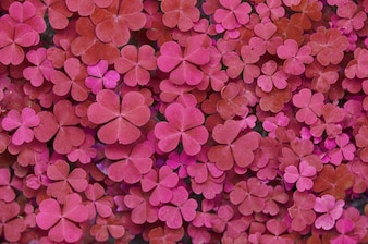 Heart shaped beautiful leaf texture background