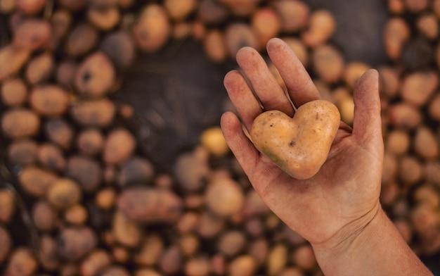 Грязный картофель в форме сердца в руке на растительном коричневом.