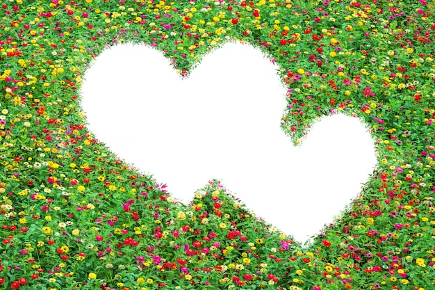 Heart-shaped field of common zinnia beautifully with green leaves growing