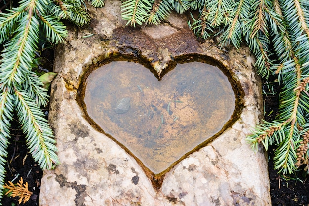 Heart-shaped hole in stone full of water beautifully surrounded by fir tree needles