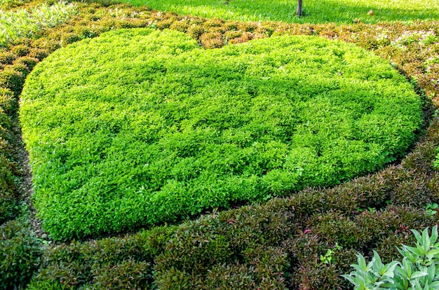 Heart-shaped park, patterned background, blurred