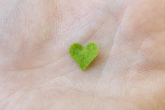 Heart-shaped shamrock leaf in the human hand close-up, macro. love of nature, closeness to nature concept