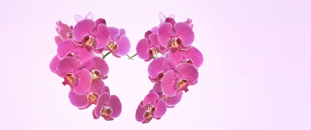 Heart-shaped with pink flowers of orchid in panoramic view on pink background