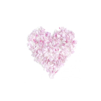 Heart with pink petals on the white background. flat lay. top view