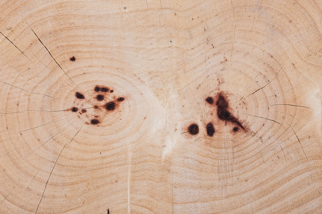 Heartwood texture of cutted tree trunk on white background