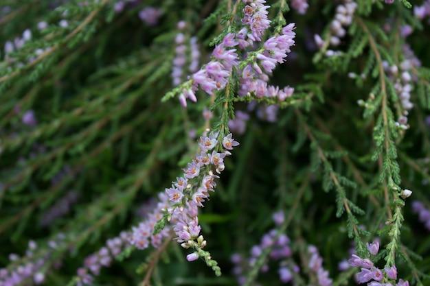 헤더 식물 삼림 식물 보라색 숲 꽃