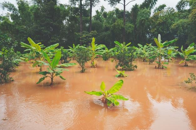 시골이나 시골의 정원에 큰 홍수