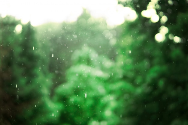 Heavy rain on the background of green trees. landscape in the wet forest.