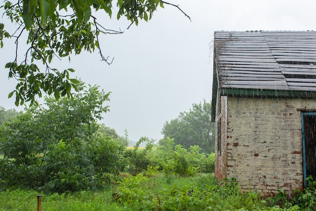 Heavy rain near an old abandoned house in a distant village. green nature.