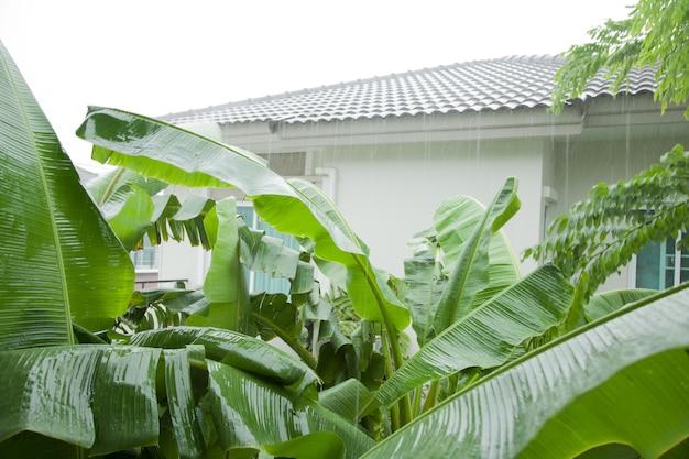 村の重い雨、木、住宅